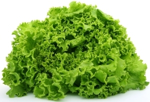 green-leaf-lettuce