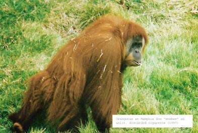 memphis orangutan 1997_edited-1