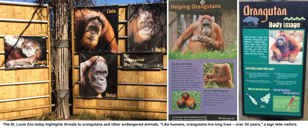 Orangutan education.jpg